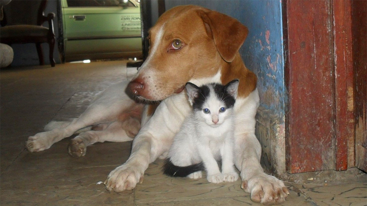 no-birth-no-kill-dog-kitten