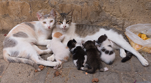 feral-cat-colony-600×330