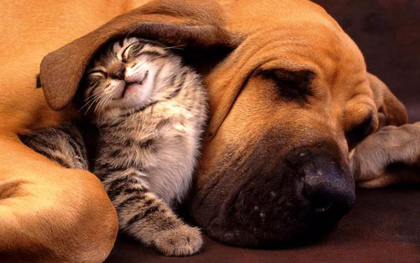 kitten-hound-600x375