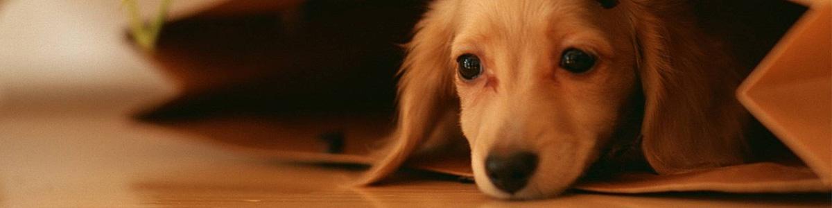 puppy-bag-1200×300
