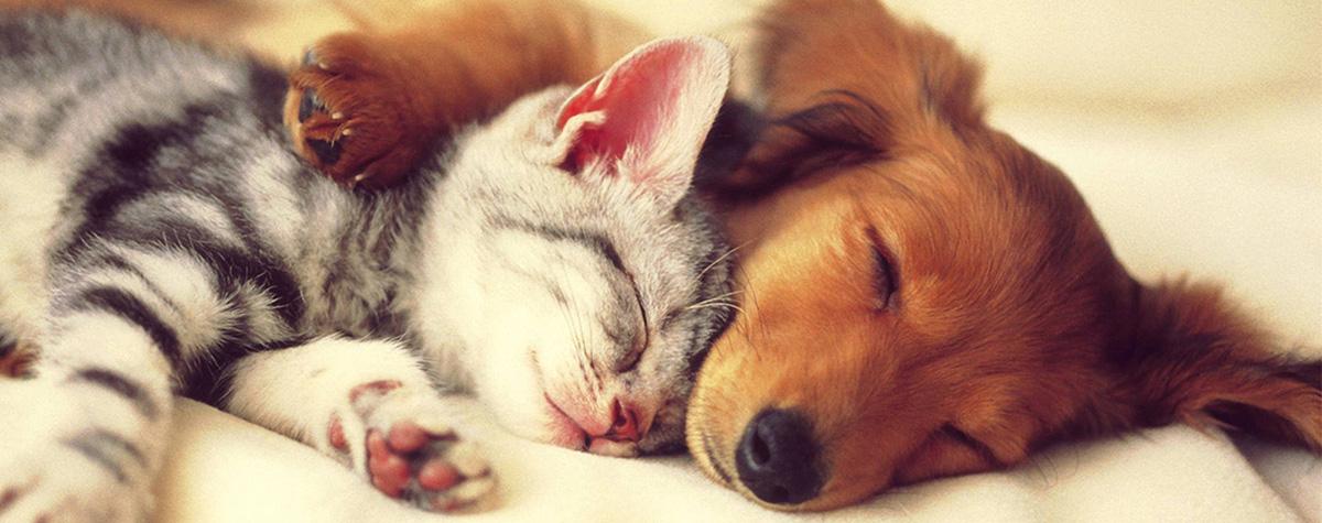 puppy-kitten-1200×475