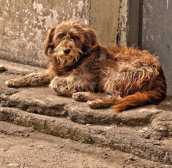street-dog-600×585